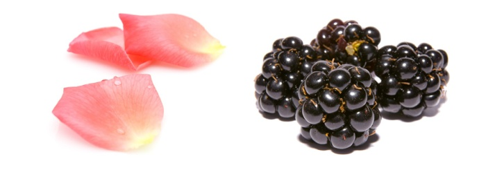 Rose Petals and Blackberries